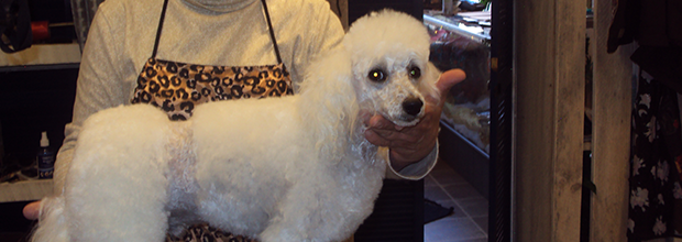 Dog Grooming | Dog Gone Beautiful Pet Services & Grooming   - Wytheville, VA